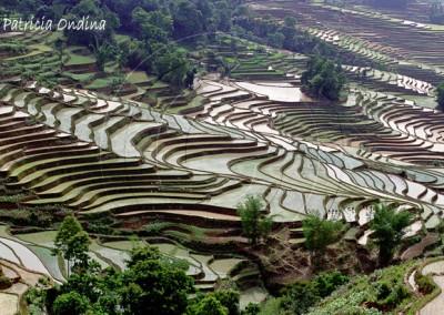 Rizières du Guizhou