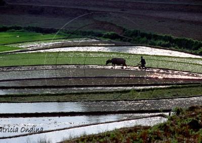 Rizières Guizhou