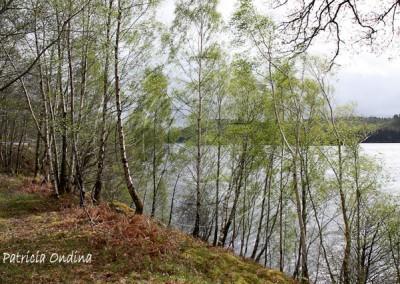 Le long des Lochs
