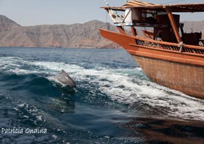 Musandam, en compagnie des dauphins joueurs