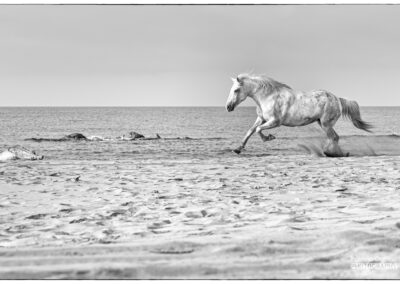 Photo Camargue ©Patricia Ondina